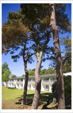 Fyrretræerne på Dueodde giver dejlig skygge i sommervarmen