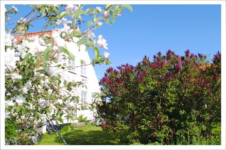 Den hyggelige have i MølleGården.